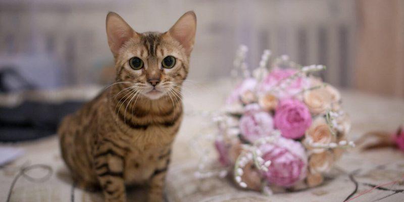 Katze sitzt neben Brautstrauß und guckt in die Kamera, Tierbilder